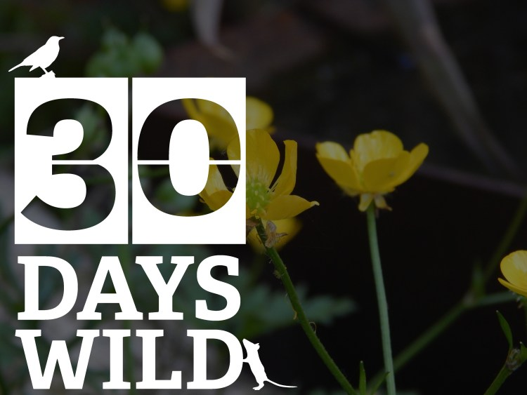 30 days wild logo buttercup