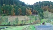 schwarzwald-6