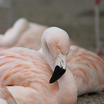 Jan Brosowski's photo