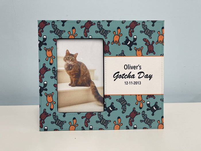 Raining Cats Picture Frame