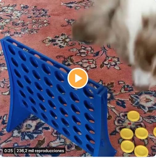 Perro jugando a las 4 en raya
