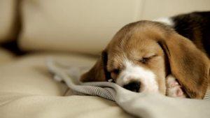 Tus mascotas y el cuidado de tus muebles