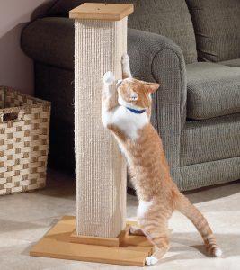 Dispositivo para gatos