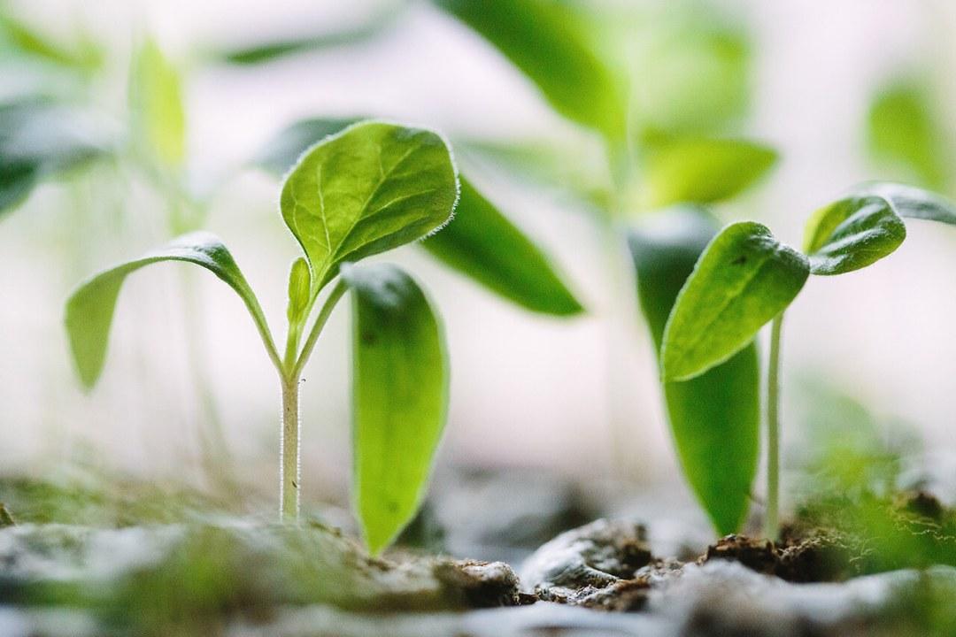 Plant New Trees