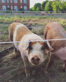 An organic farm out back? Oui!