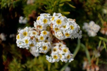 flora norte de chile