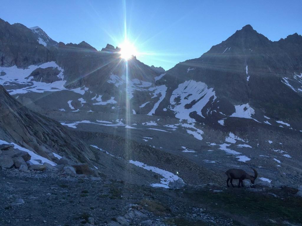 cabra alpes suiza