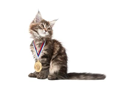 Photo Credit: National Cat Protection Society