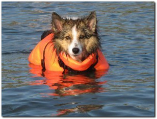 Alaskan Floatplane Pilot Rescues Dog