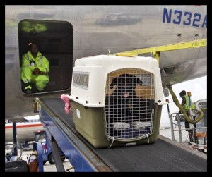 animal crate being stored in cargo