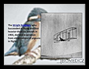 bird and wright brothers