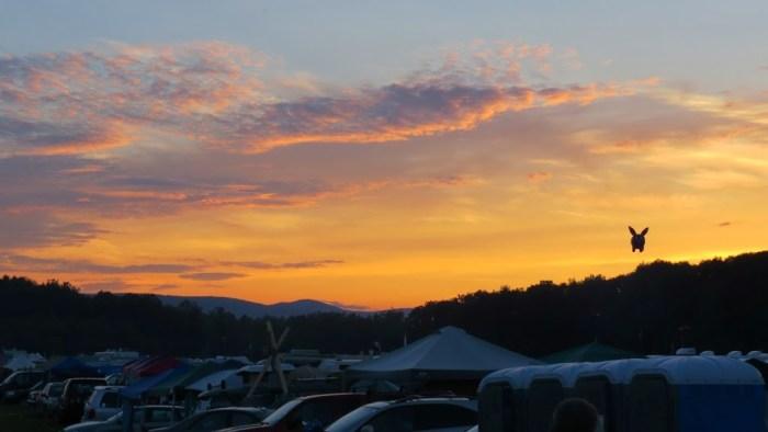 Grey Fox sunset