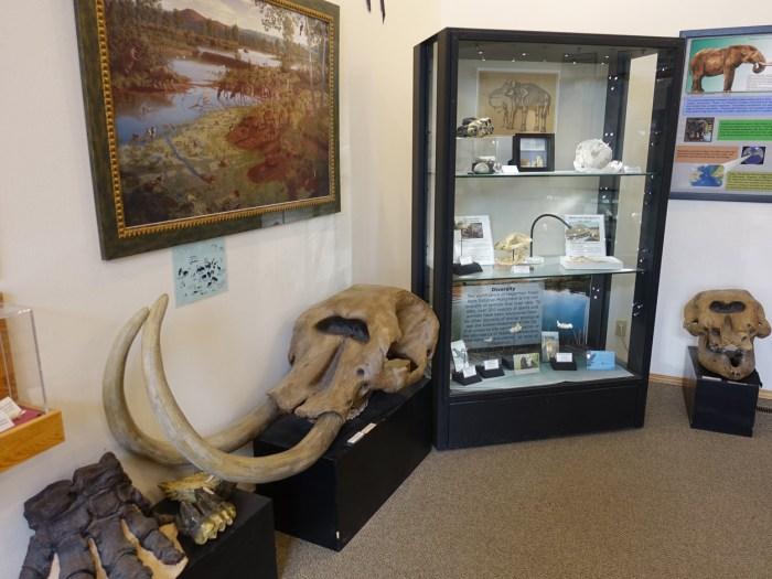 Hagerman Fossils