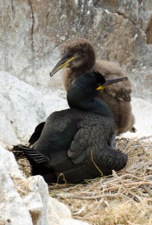 Shag with Chick