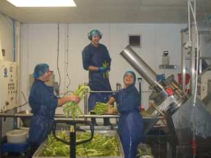 Celery Production Run