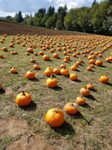 Find your local pumpkin patch!