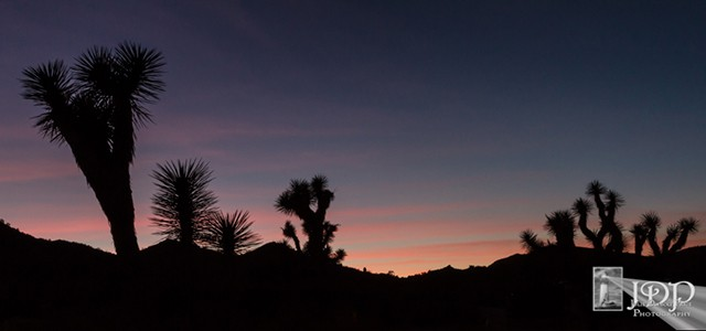 Blue hour in Joshua Tree National Park