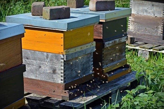 ruche_abeilles