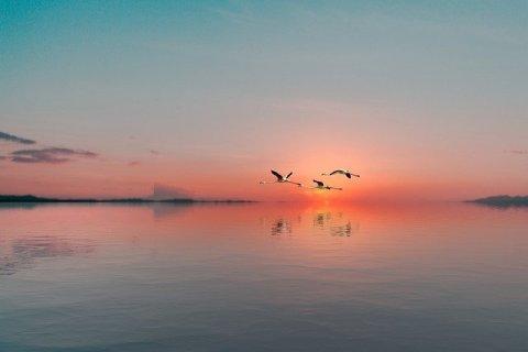 Miracle Morning silence : paysage apaisant avec vol de grues dans la lumière du matin