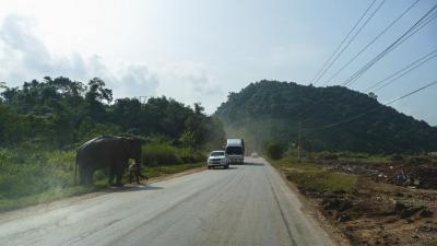 toluangnamtha1