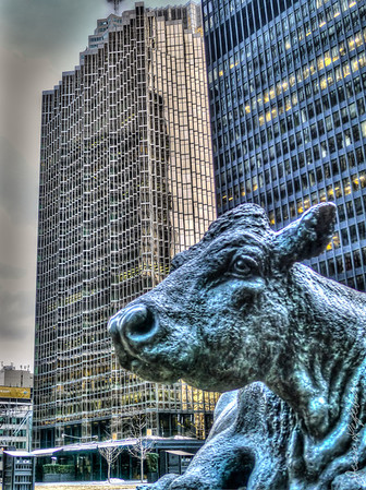 Cow from financial district