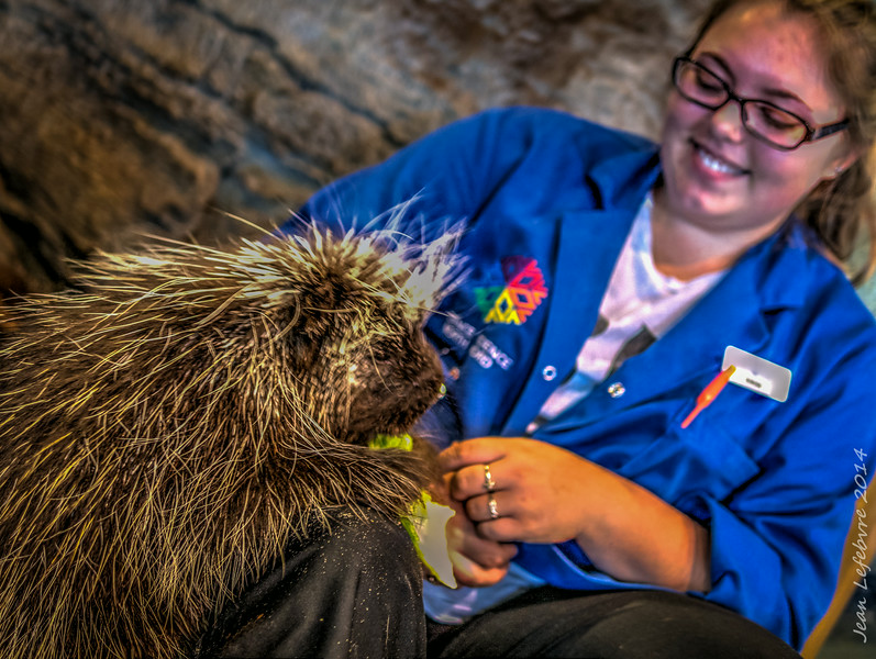 Porcupine at Science North