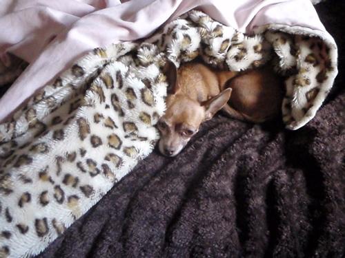 anela-her-blanket