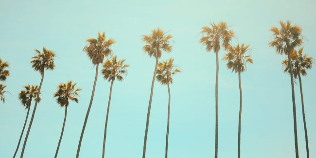 A line of palm trees with a light blue sky background.