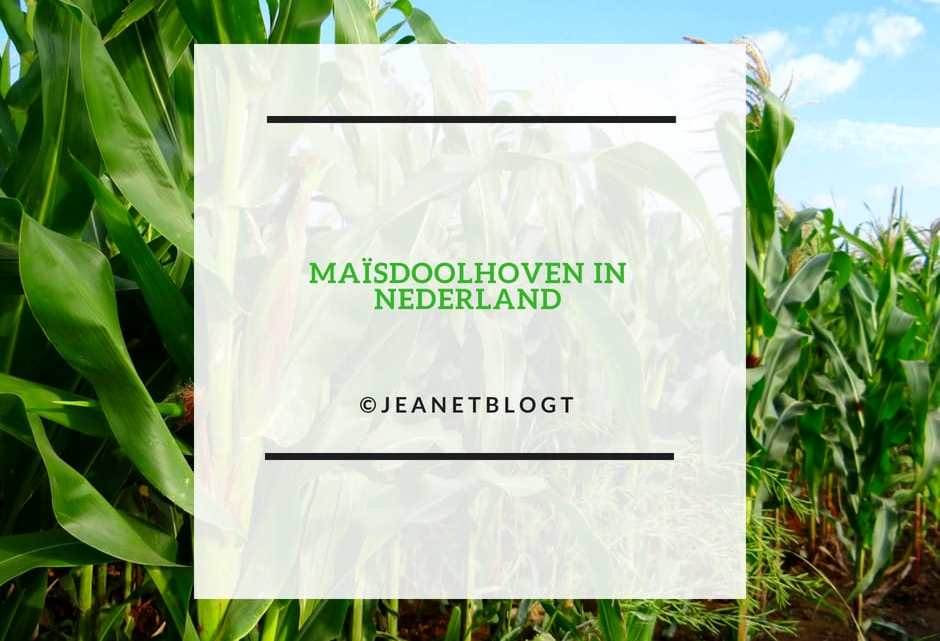 Maisdoolhoven in Nederland.