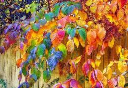 multicoloured leaves