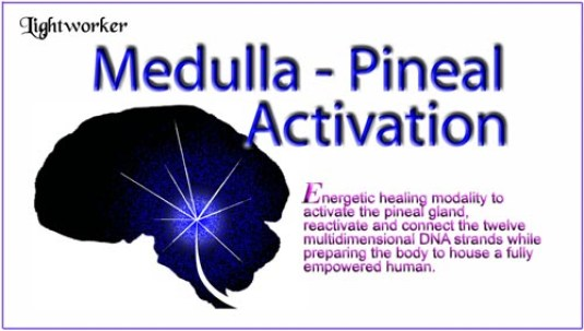 Medulla-Pineal Activation