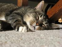 Sleeping in the winter sun. Mmm this carpet is comfortable.