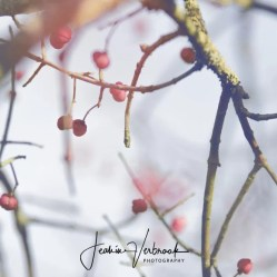 Spindle tree ADW 2017