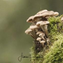 Mushroom Hoge Veluwe 2017