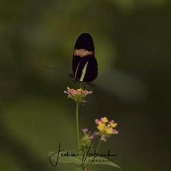 Butterfly Blijdorp 2017