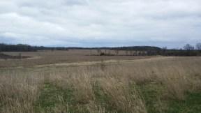 Old Streich Land 2