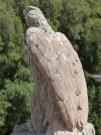Aigle impérial sur la terrasse