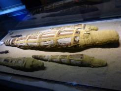 Crocodiles momifiés
