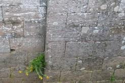 L'abbaye de Sylvanès - inscription extérieure côté choeur