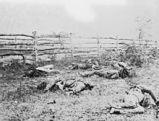 les morts d'Antietam - soldats confédérés