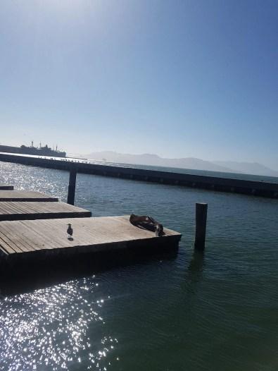 Pier 39, sea lions on strike...