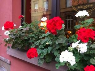 Hi flowers in Colmar