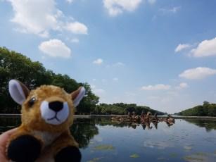 Cutie enjoying blue sky and blue pond