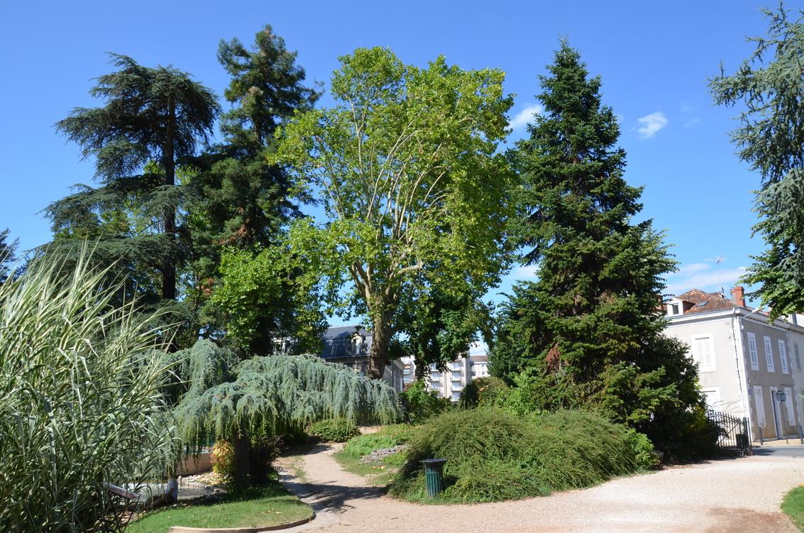Périgueux_Arènes_arbres