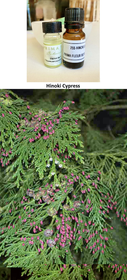 photo showing essential oil of Hinoki and a leaf/twig.