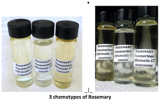 showing the color differences of 3 chemotypes of Rosemary oil.