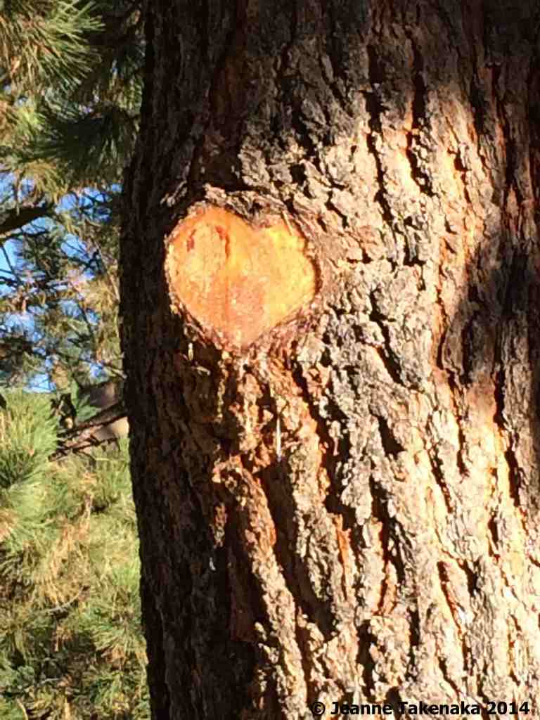 A heart-shaped scar on a tree after a branch was cut off. A symbol to remind us of the importance of loving well.