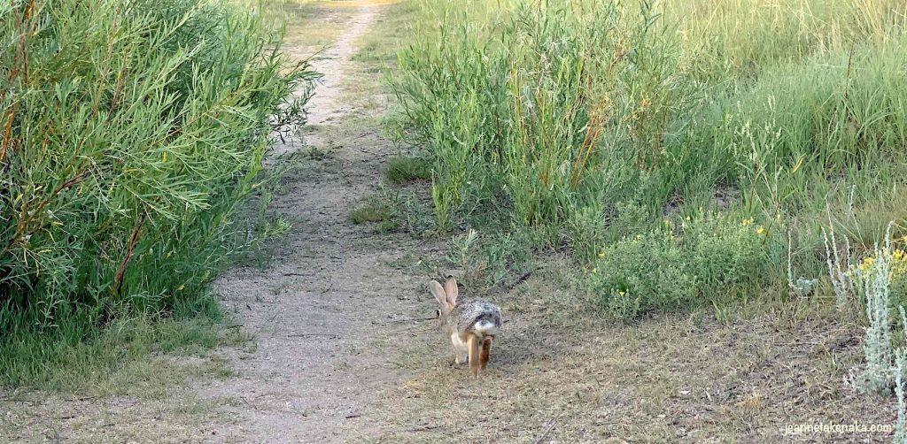A rabbit races away in fear