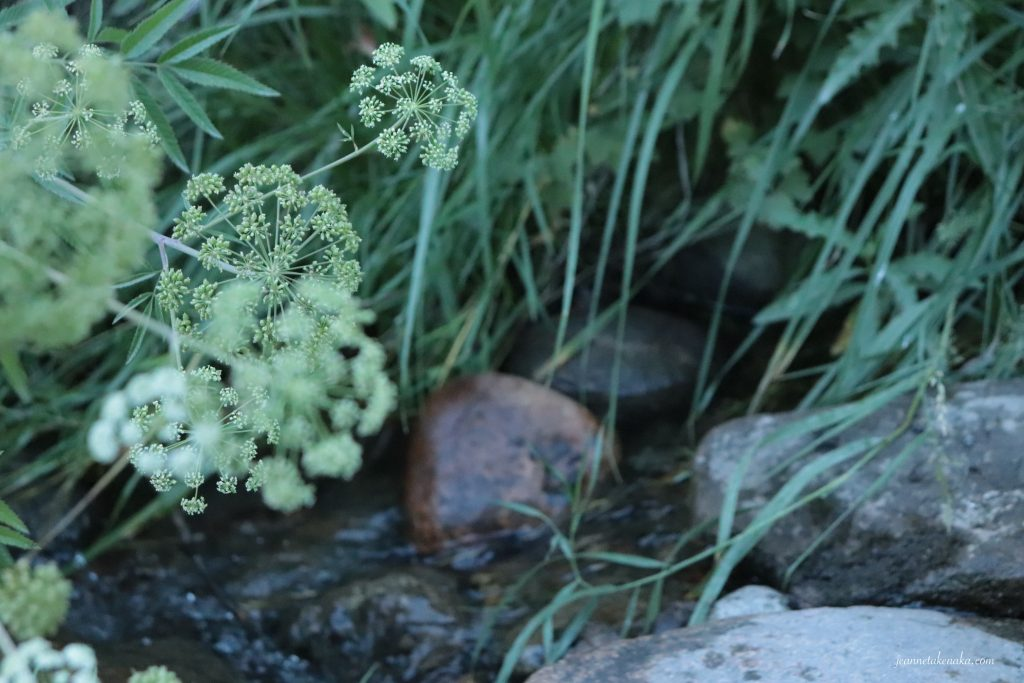 A picture of white flowers hanging over a small stream