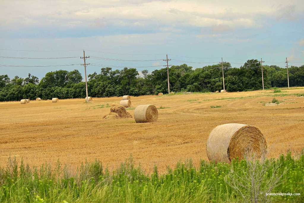 Hay bales in a mown field